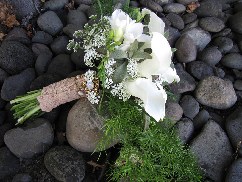 Fotos Sträuße Weiß Drachenwurz Blumen Freesien Blumensträuße Calla palustris Blüte Freesie