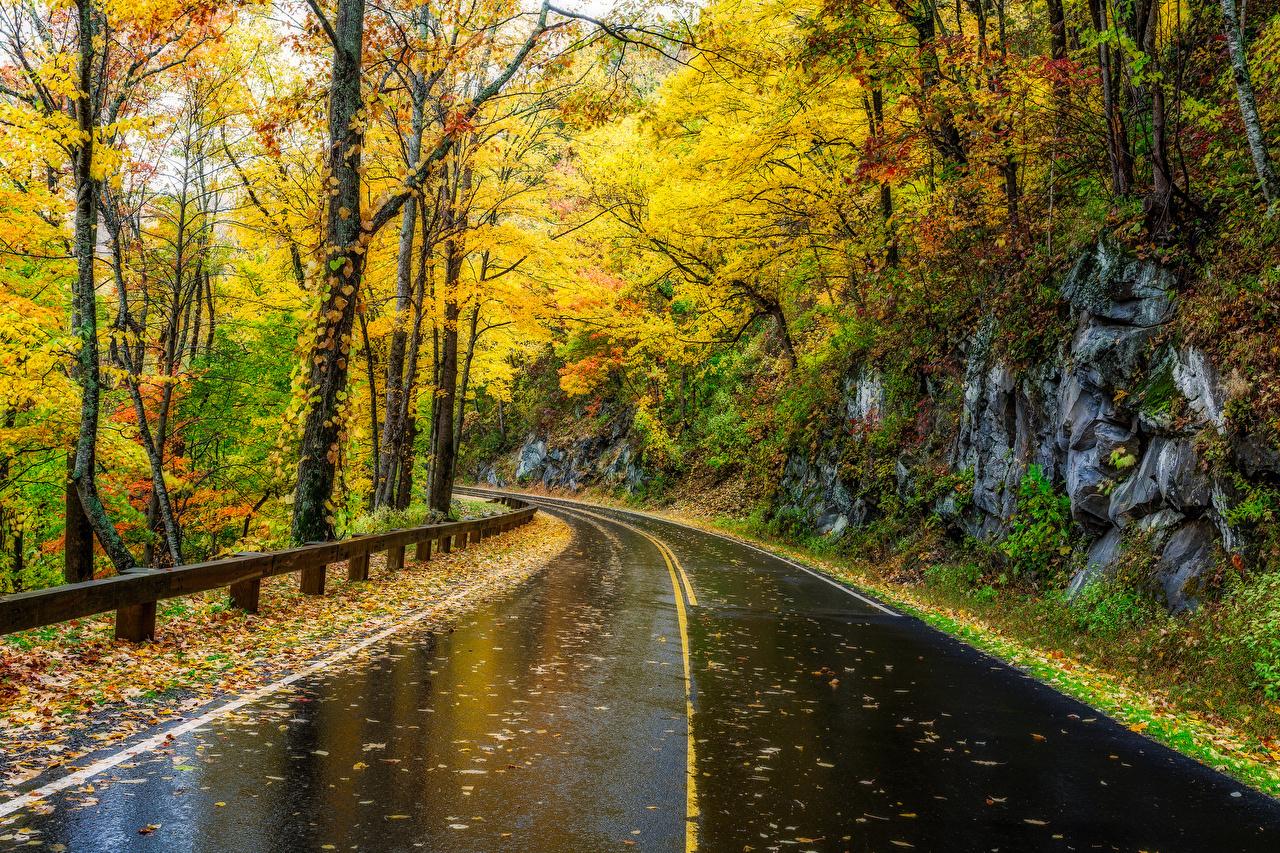 Desktop Wallpapers Usa Great Smoky Mountains Nature Autumn Park