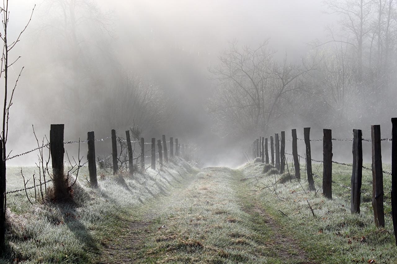 Image Fog Nature Roads Fence Grass