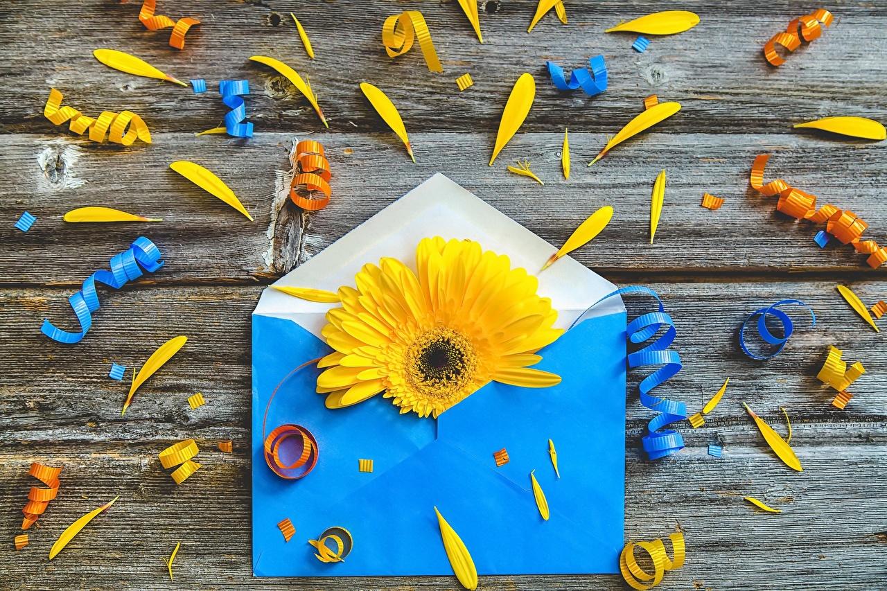 Fotos Briefumschlag Gerbera Blüte originelle Blumen Kreativ kreative