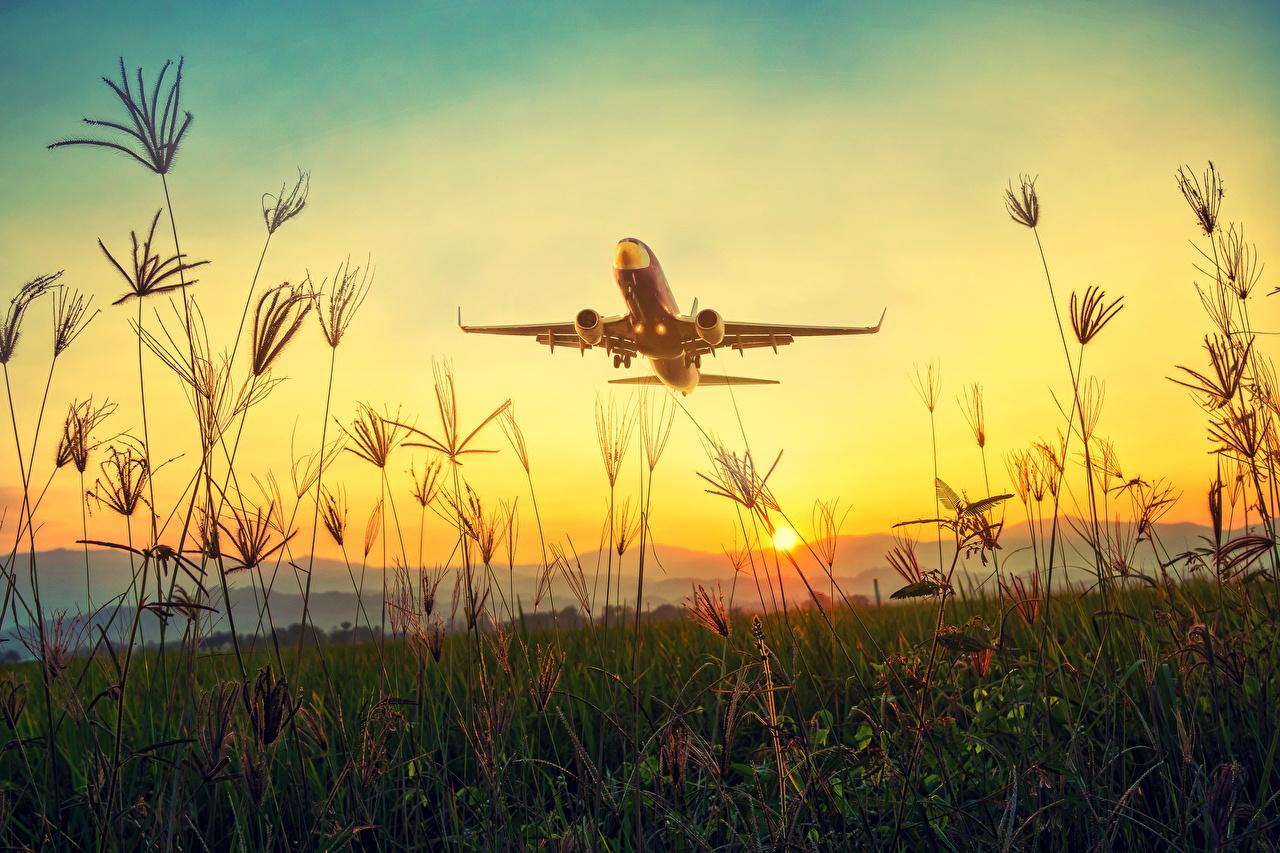 Tapety na pulpit samolot Samolot pasażerski startują Natura Słońce świt i zachód słońca Trawa Lotnictwo Samoloty startuje startujący Start (lotnictwo) przyroda Wschody i zachody słońca