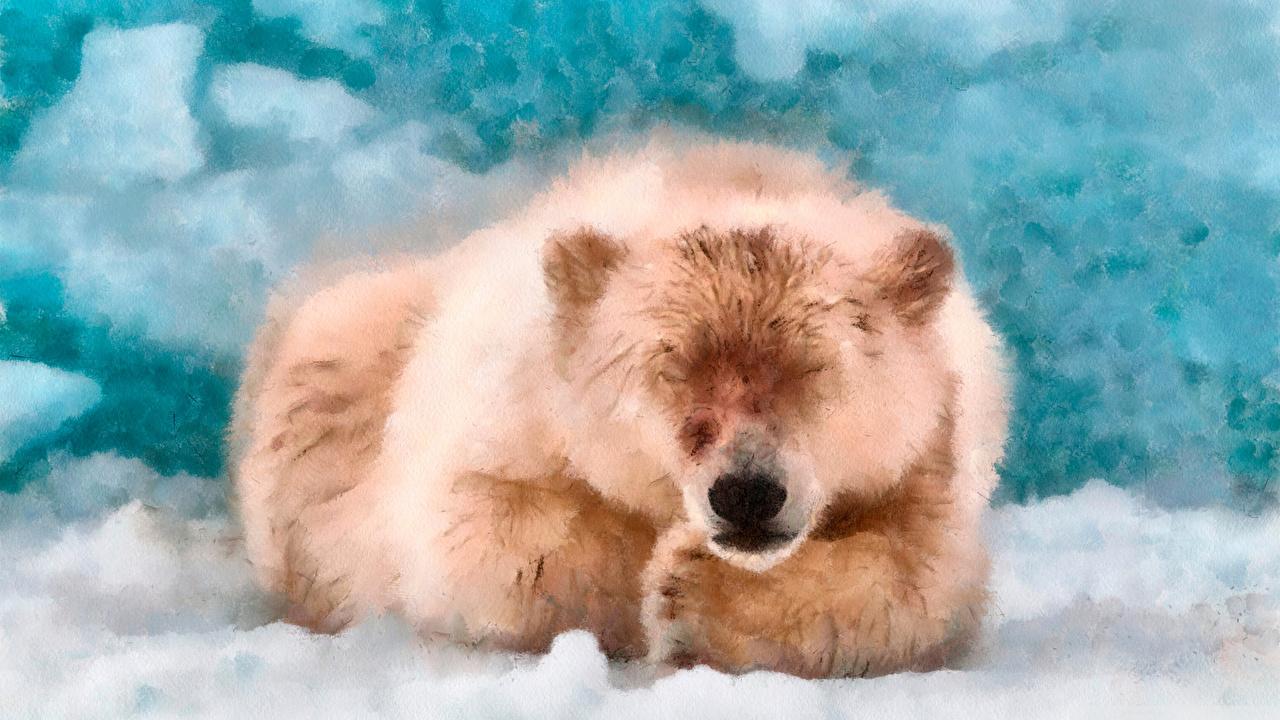Wallpaper bear Sleep animal Bears sleeping Animals