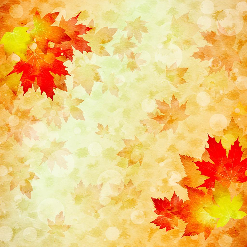 Desktop Hintergrundbilder Blattwerk Papier ahorn Natur Herbst Vorlage Grußkarte Gezeichnet Blatt Ahorne