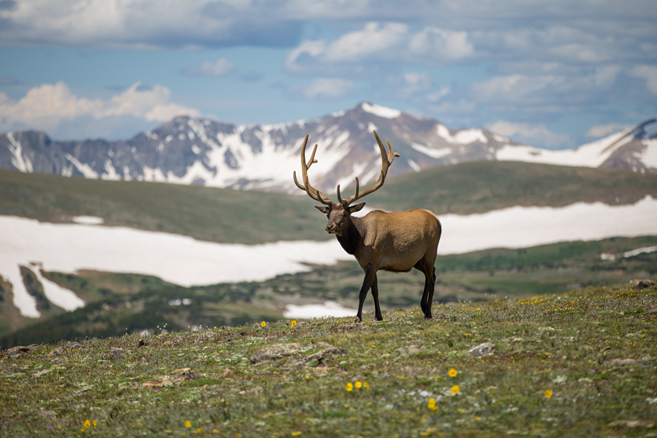Pictures Deer Horns blurred background animal Bokeh Animals