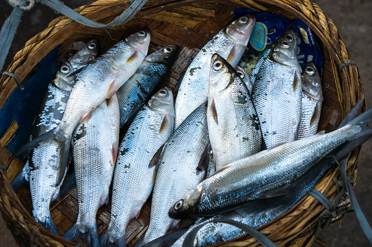Fotos Weidenkorb Fische - Lebensmittel das Essen Lebensmittel