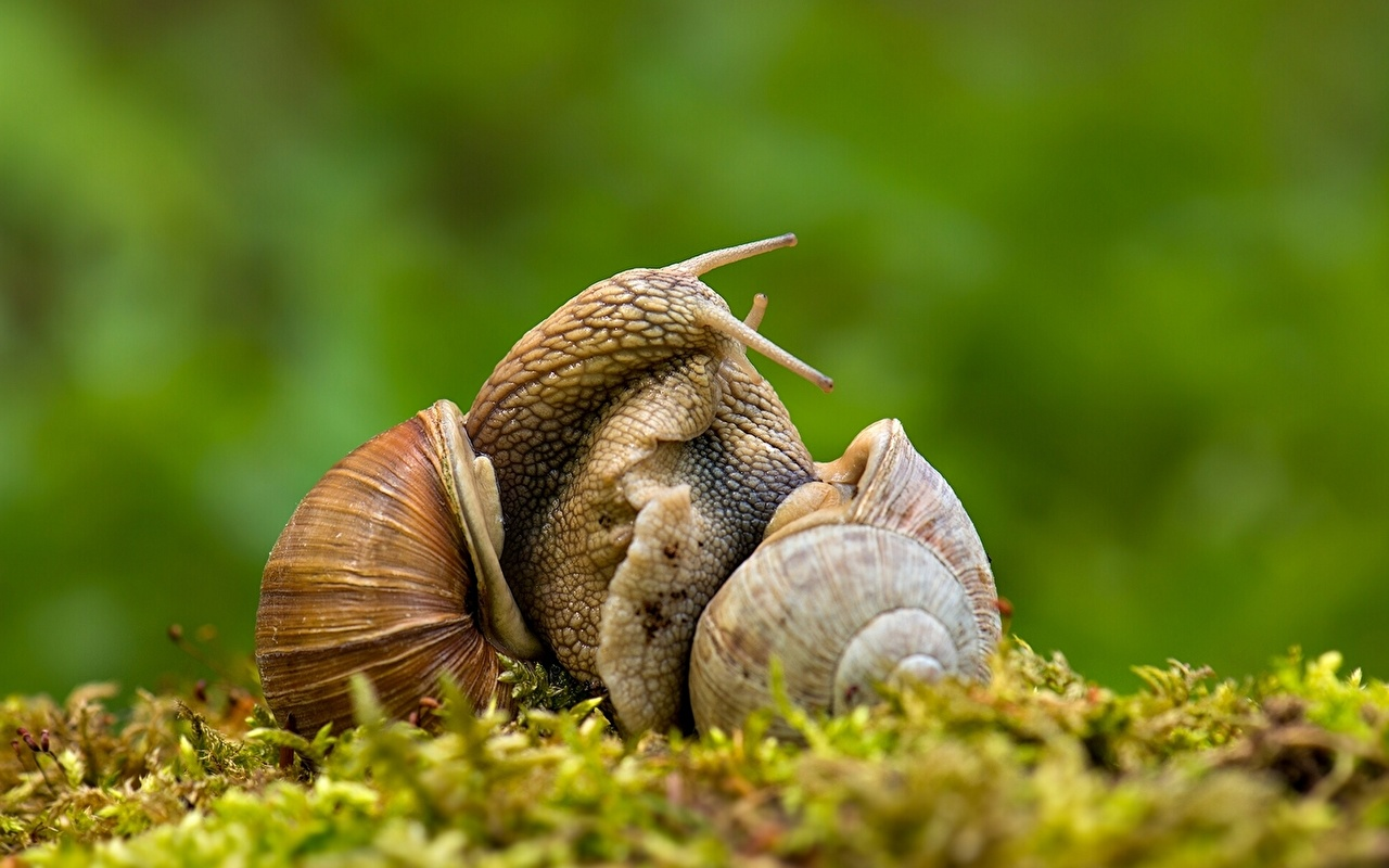 Wallpaper Snails Two Animals 2 animal