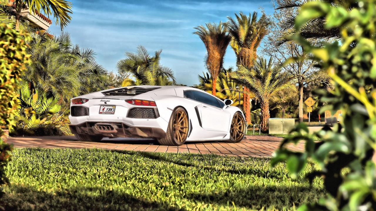 Image Lamborghini Aventador HDRI White auto HDR Cars automobile