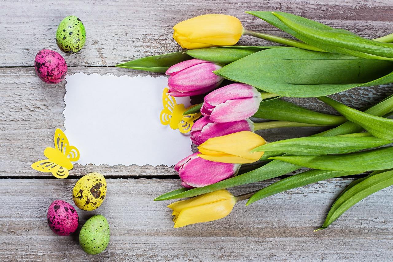 Bakgrundsbilder Påsk Ägg tulpansläktet Blommor Hälsningskort mall Träplankor Tulpaner blomma