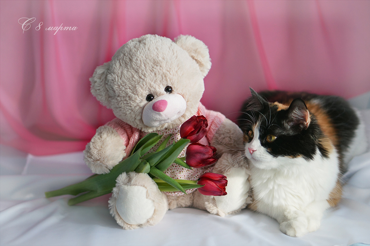 Photo Cats International Women's Day Russian Red tulip flower Teddy bear Three 3 Animals Holidays cat March 8 Tulips Flowers animal