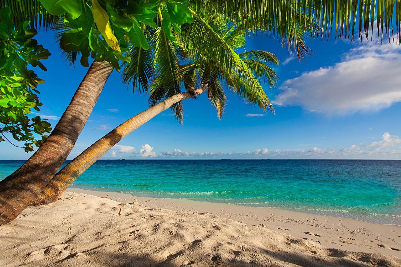 foto strand meer natur tropen palmengewächse küste horizont