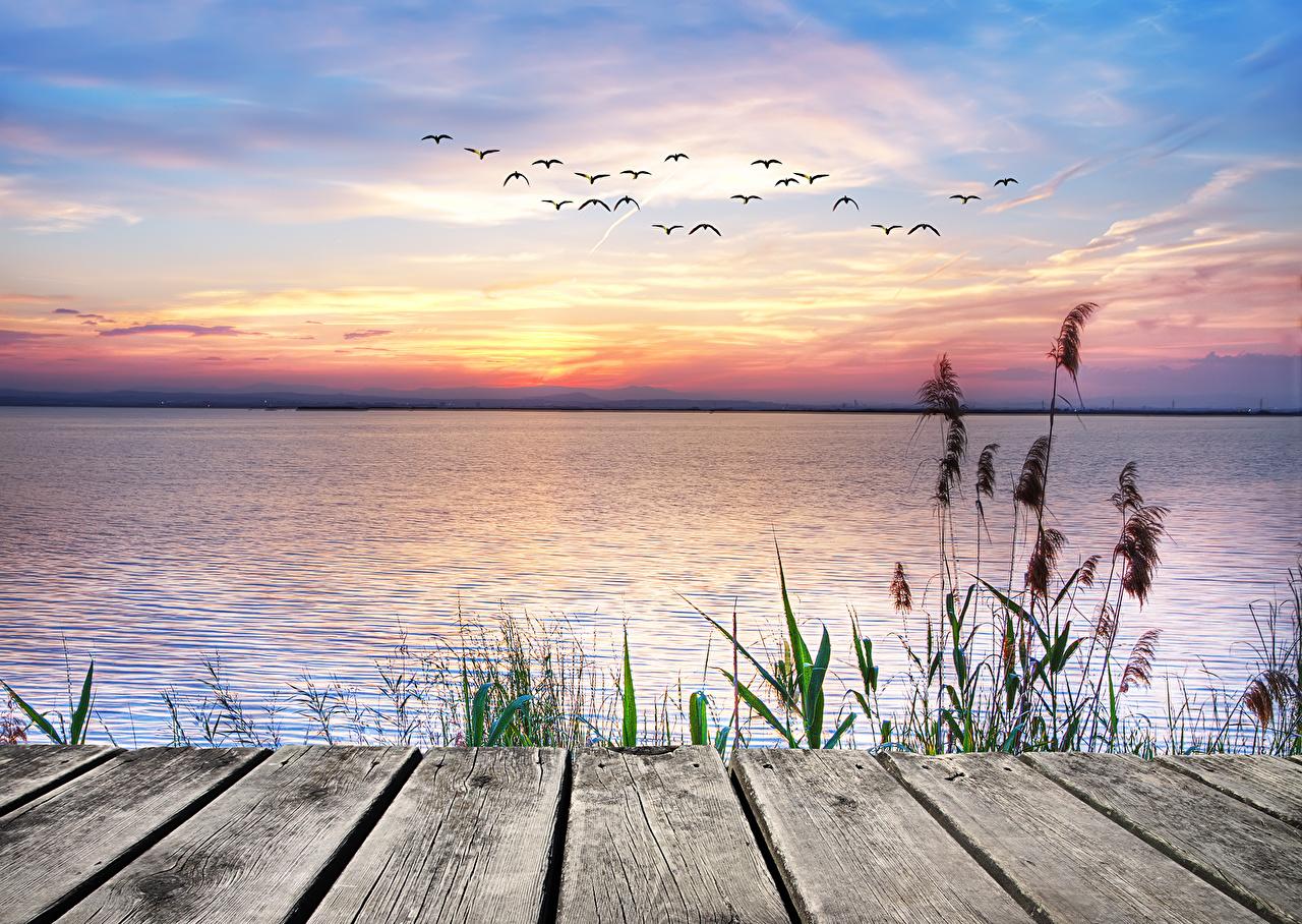 Wallpaper Birds seagulls Nature Sky Sunrises and sunsets Water Gull bird sunrise and sunset