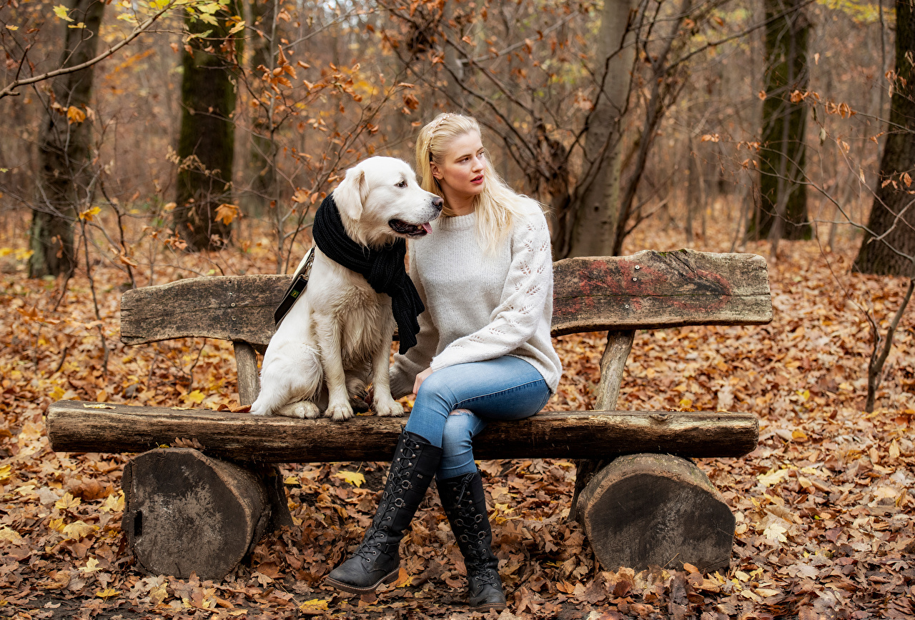 Photos dog Foliage Blonde girl Laura Autumn female Jeans Sweater Bench Sitting Animals Dogs Leaf Girls young woman sit animal