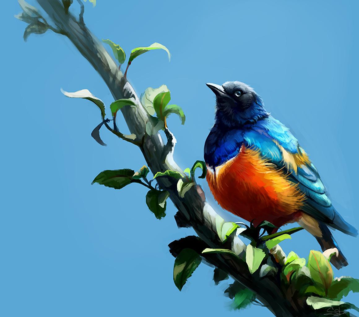 Wallpaper bird Superb Starling Branches animal Painting Art Birds Animals
