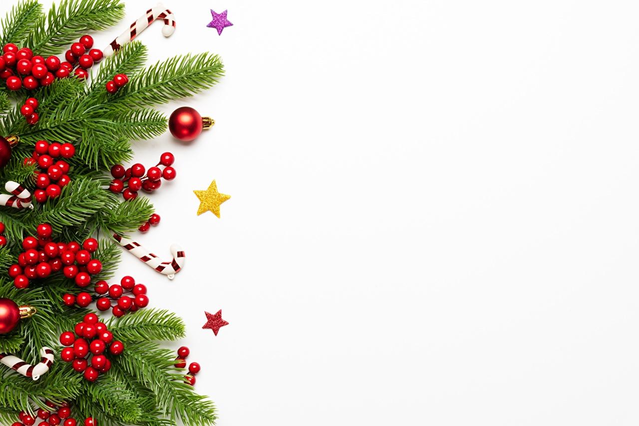 Bilder Neujahr Ast Beere Vorlage Grußkarte Weißer hintergrund