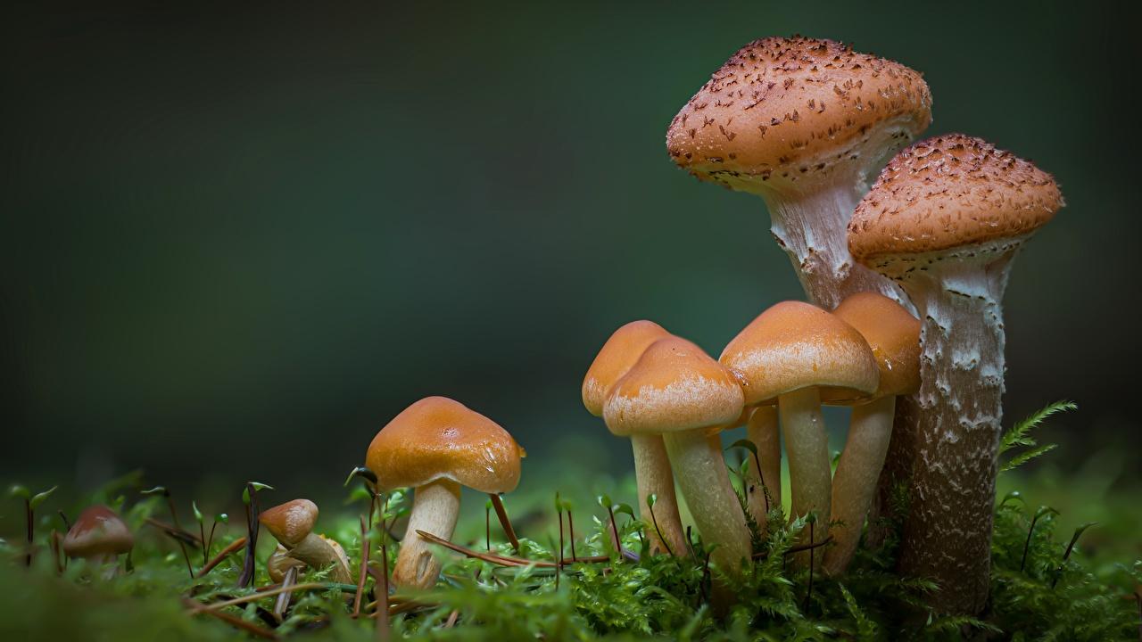 Bilder Natur Laubmoose Pilze Natur Großansicht hautnah Nahaufnahme