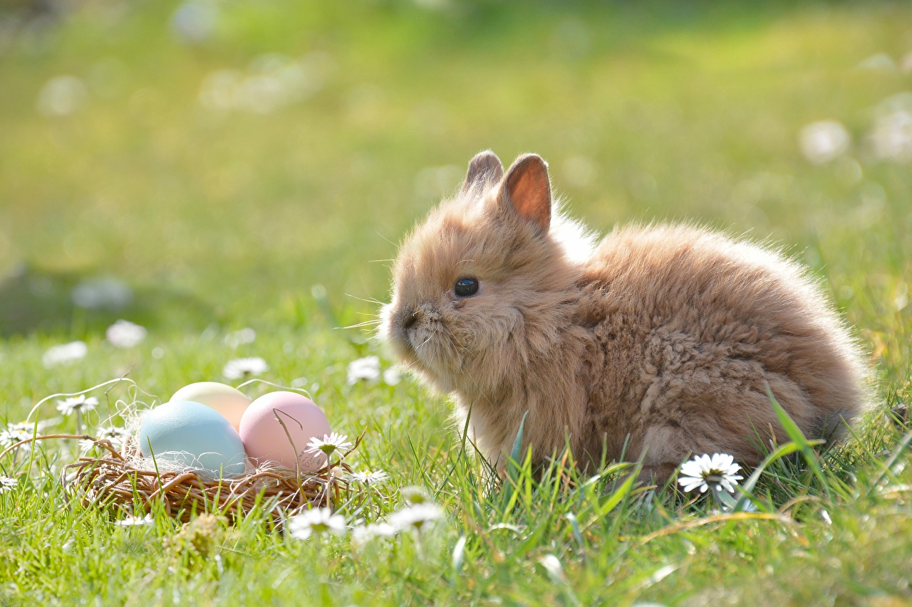 Картинка Пасха кролик яйцами траве Животные Кролики яиц яйцо Яйца Трава животное