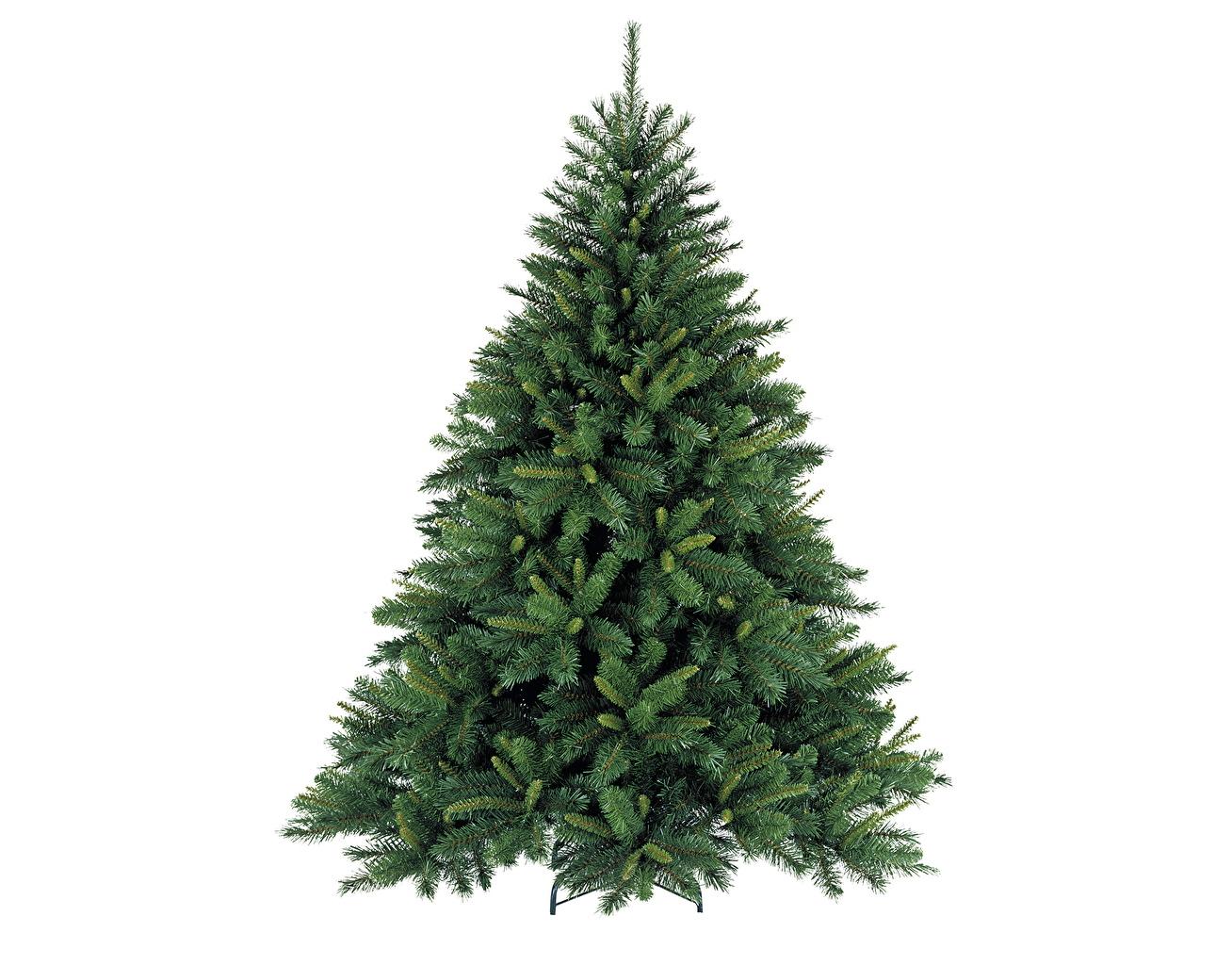 Foto Natur Tannenbaum Bäume Nahaufnahme Christbaum Weihnachtsbaum hautnah Großansicht