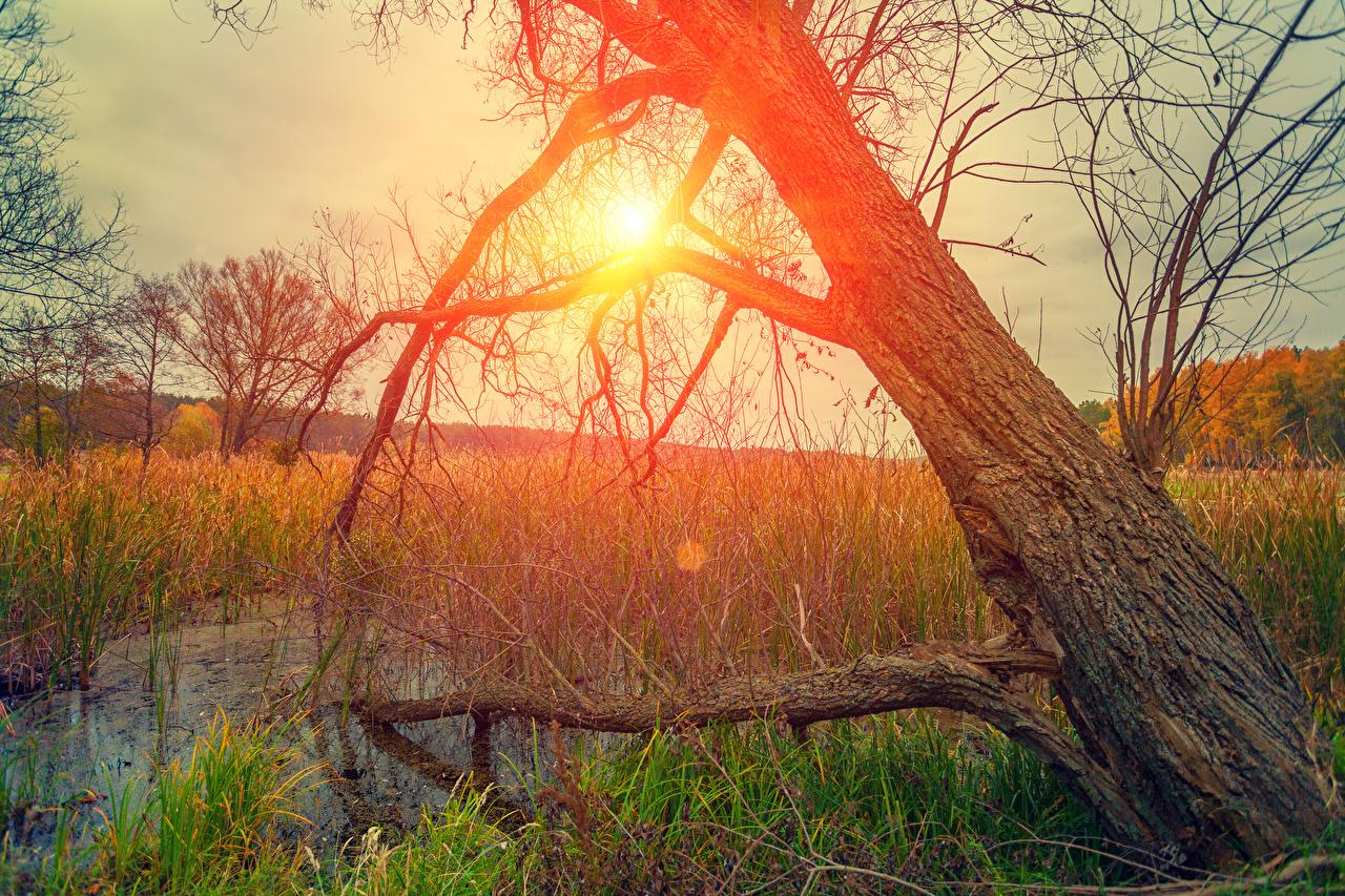 Desktop Hintergrundbilder Natur Sonne Sumpf Baumstamm Morgendämmerung und Sonnenuntergang Gras Sonnenaufgänge und Sonnenuntergänge