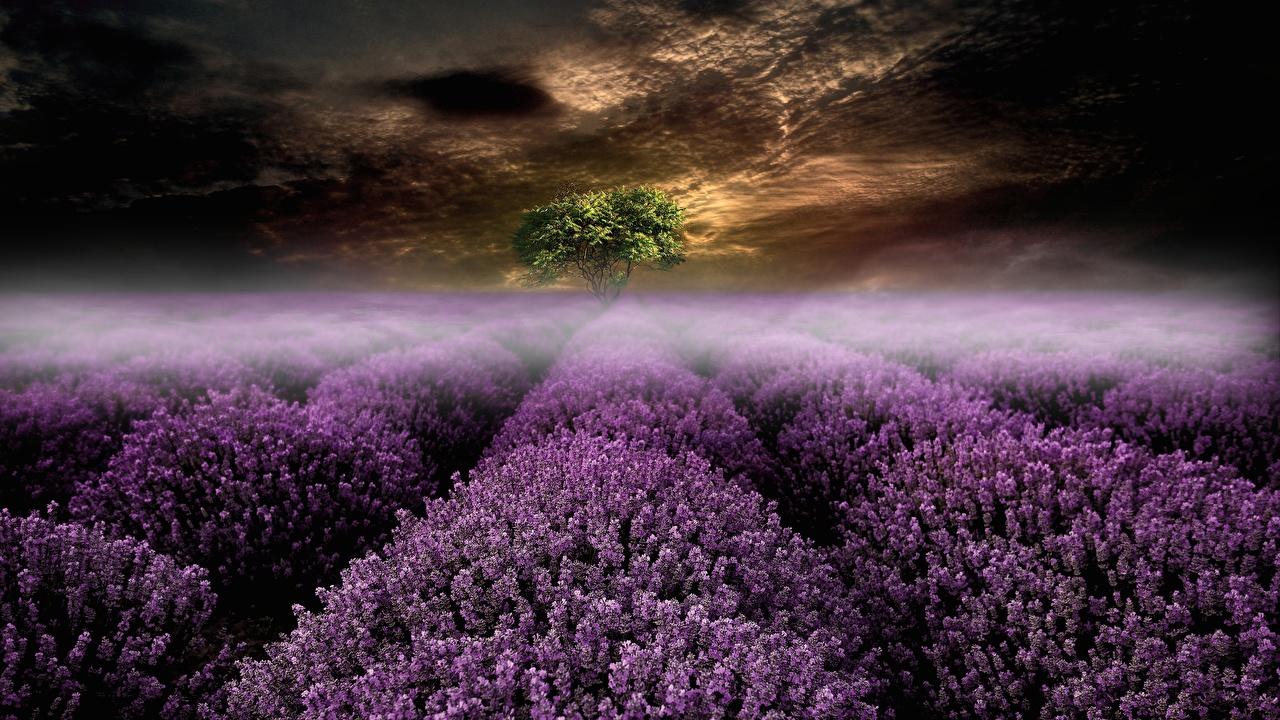 Desktop Hintergrundbilder Nebel Natur Felder Lavendel Abend Acker