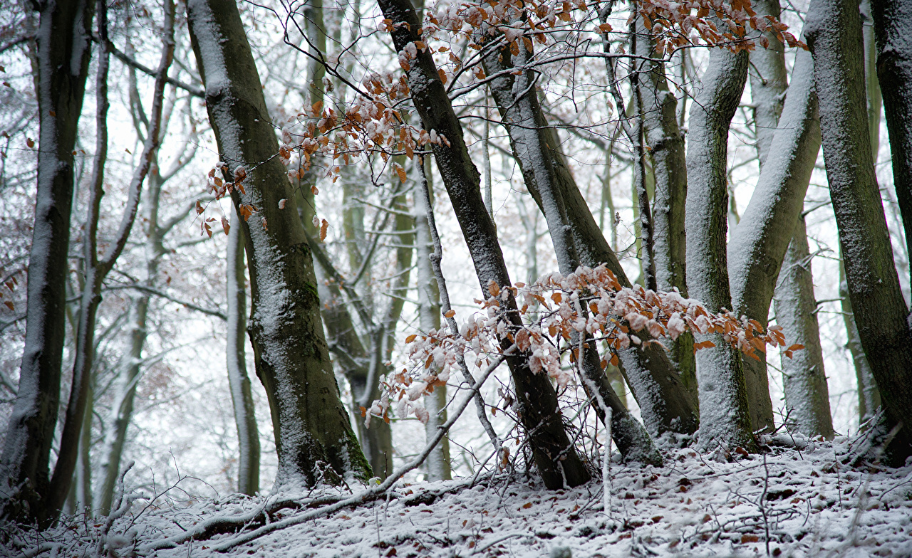 Photos Winter Nature Snow forest Trees Forests