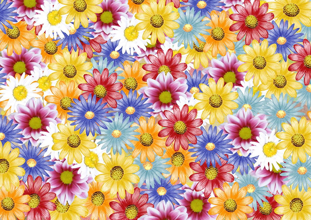 Bilder von Mehrfarbige Blüte Gänseblümchen Gezeichnet Bunte Blumen