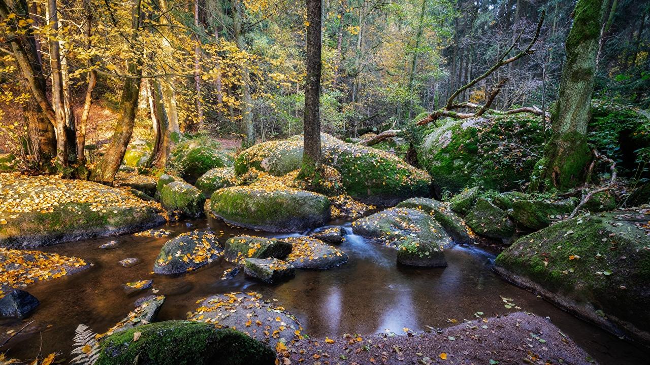 壁紙 森林 石 ドイツ Reserve Doost コケ 渓流 バイエルン州