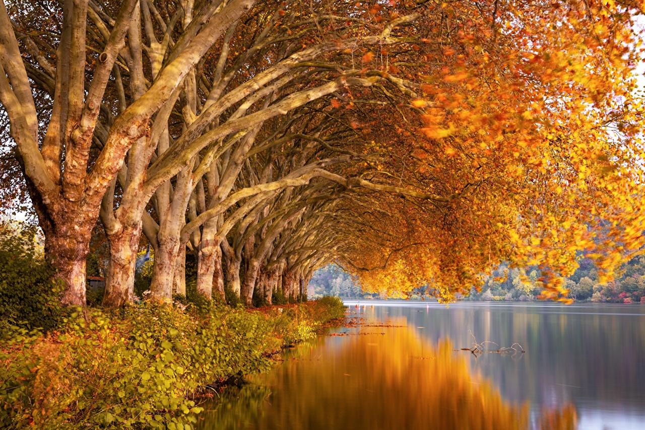 Fotos Natur Herbst Reflexion Ast Fluss Bäume spiegelt Spiegelung Spiegelbild Flusse