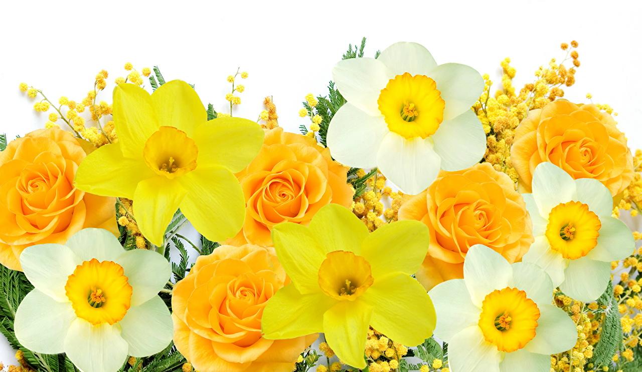 壁紙 スイセン バラ 黄色 花 ダウンロード 写真