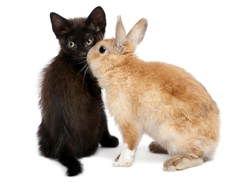 Foto's kater konijnen Twee 2 Dieren kat poes Katten Konijn een dier