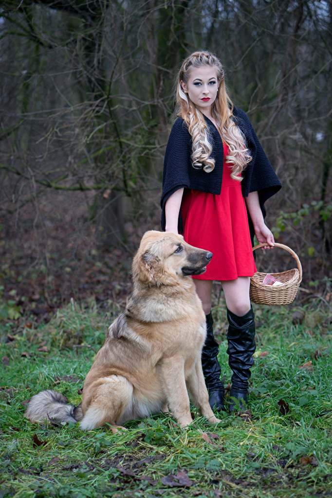 Picture Blonde girl Red Riding Hood Wearing boots Jessica Pose young woman Wicker basket Staring gown  for Mobile phone posing Girls female Glance frock Dress