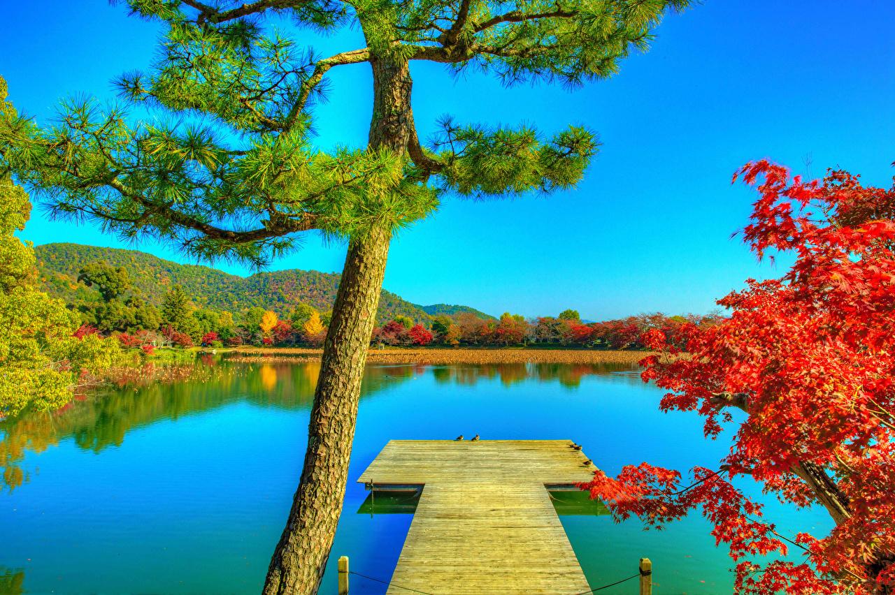 Images Kyoto Japan Daikaku-ji HDR Autumn Nature Pond Berth Trees HDRI Pier Marinas