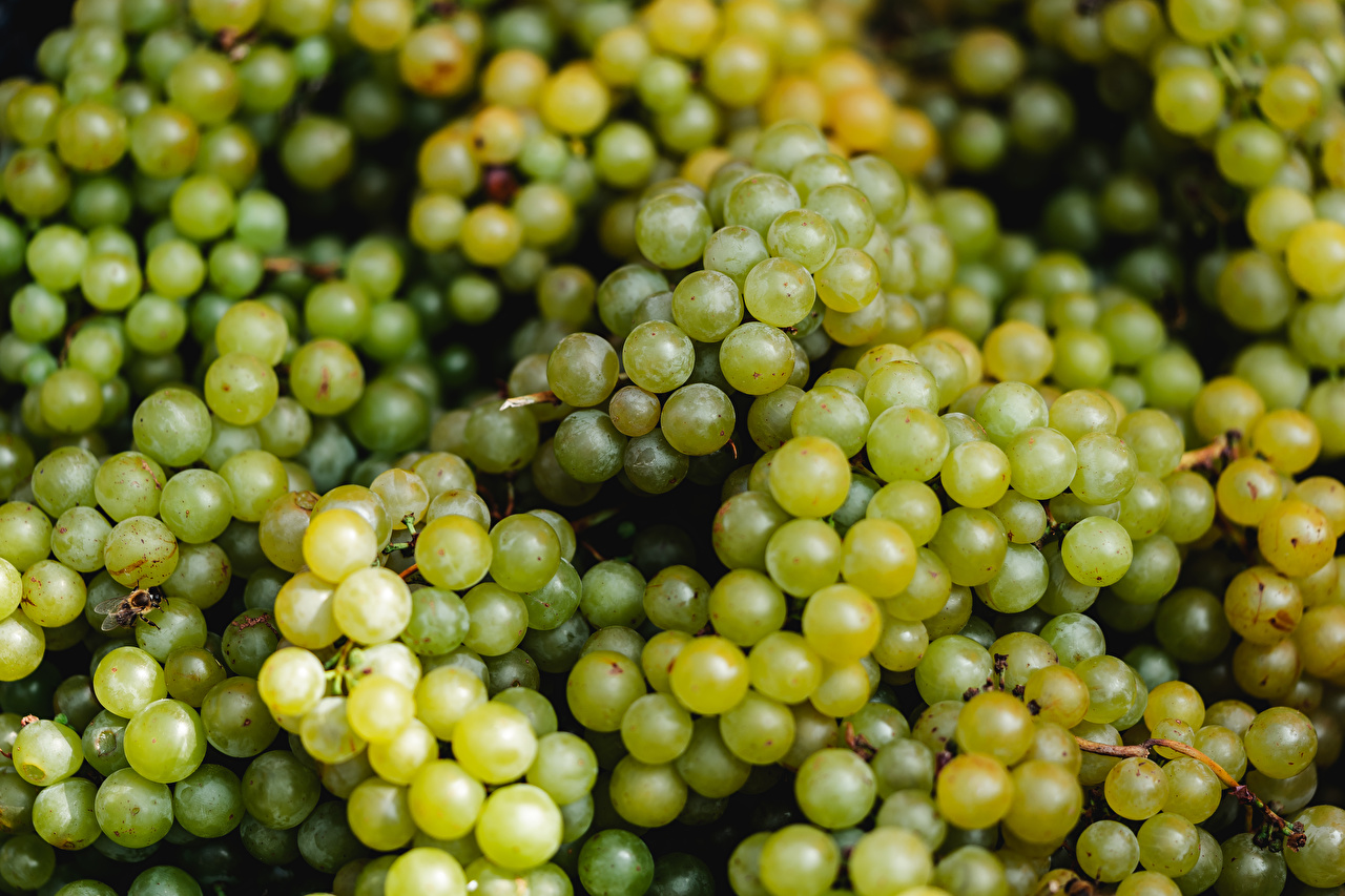 Image Green Grapes Food Berry Many
