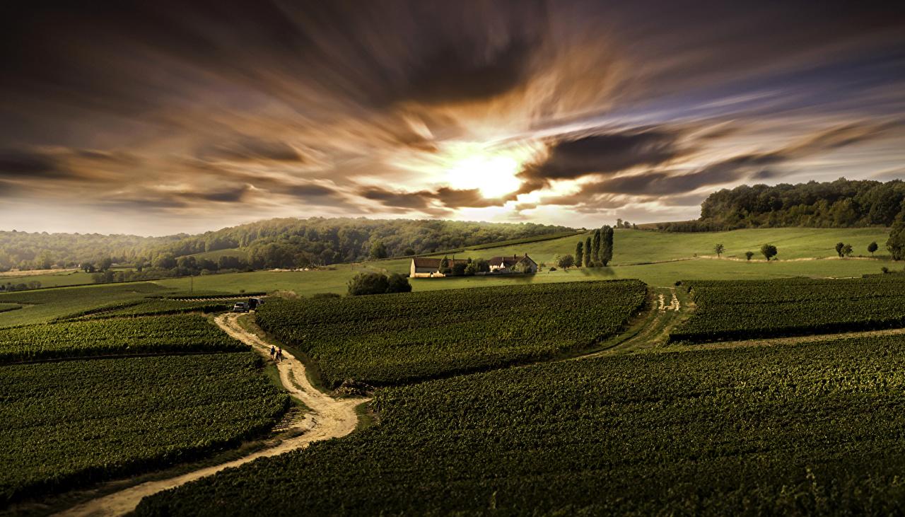 Foto Francia Bas-Rhin Natura Cielo Il prato Paesaggio Campo agricolo Albe e tramonti alba e tramonto