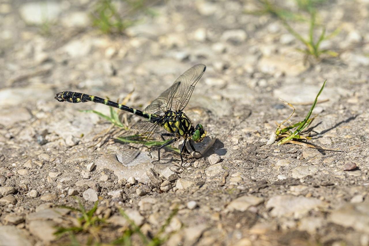Foto Libellen Insekten Tiere Großansicht hautnah ein Tier Nahaufnahme