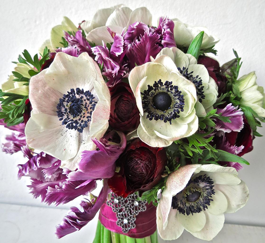 Fonds d'ecran Bouquets Anémones Fleurs télécharger photo