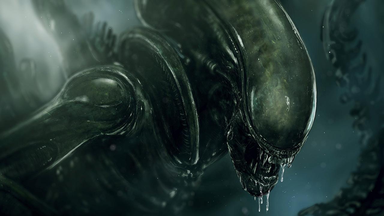 Fonds d'ecran Monsters Alien (film) xenomorph Fantasy télécharger photo