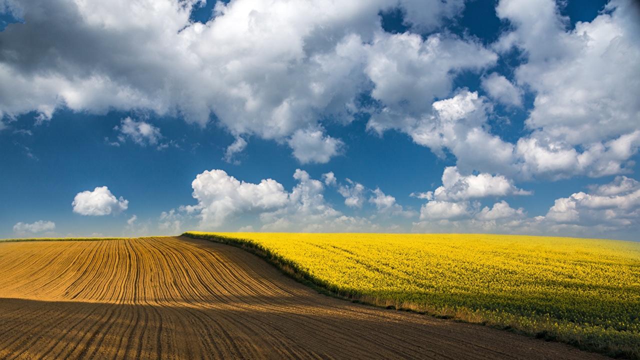 Bilder von Raps Natur Himmel Felder Wolke Acker