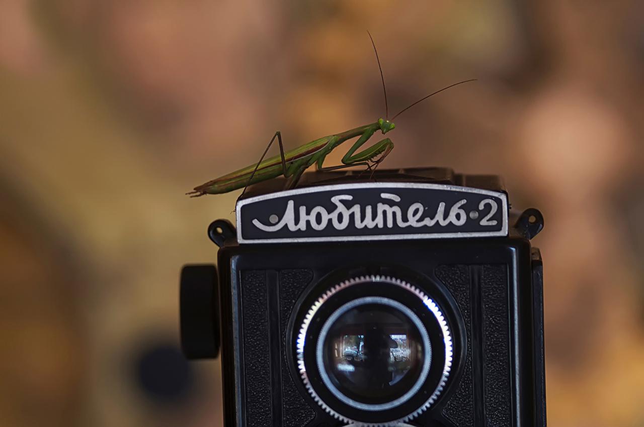 Desktop Wallpapers Insects mantodea Camera Retro animal Closeup Mantis vintage antique Animals