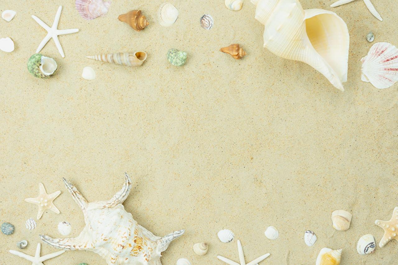 Immagine Arena Conchiglie marine Modello biglietto di auguri Sabbia