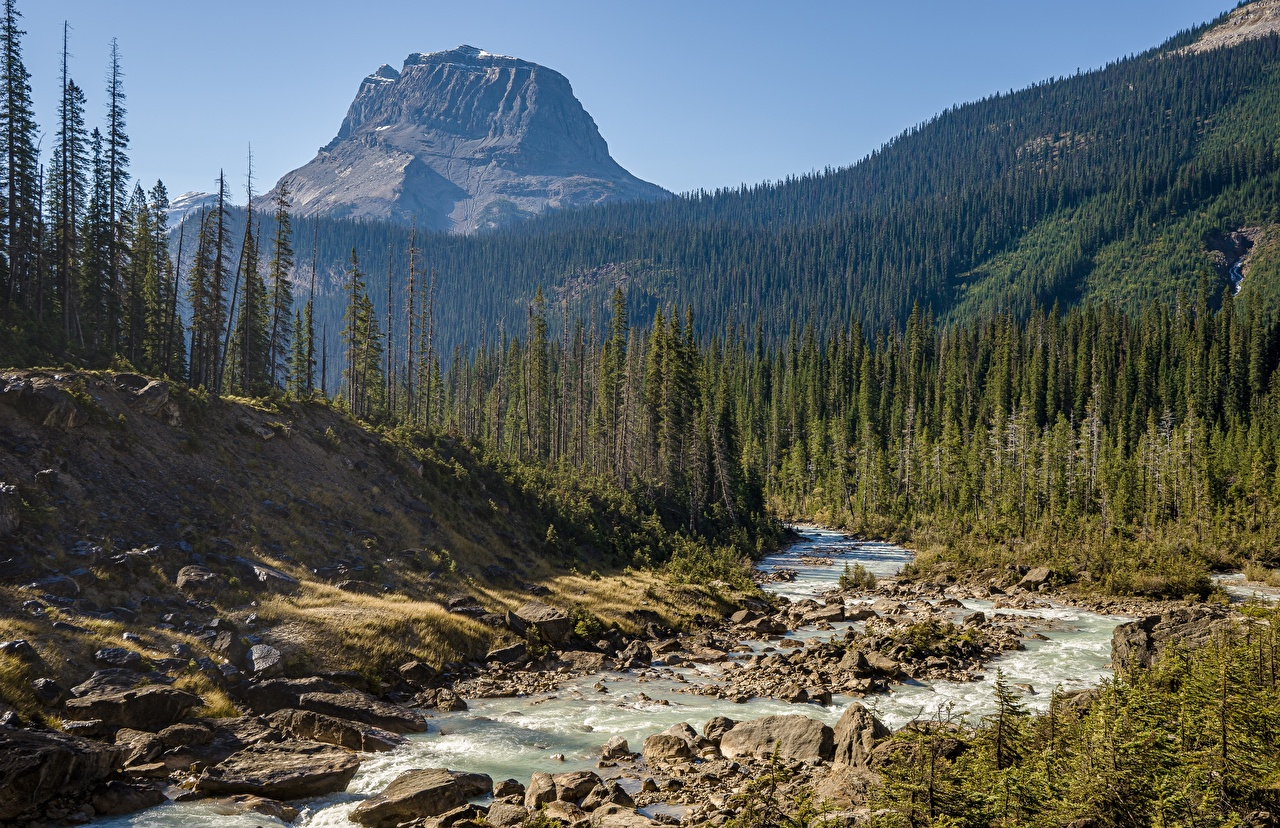 Photo Canada Yoho National Park Nature Mountains park Forests Rivers Stones mountain Parks forest river stone