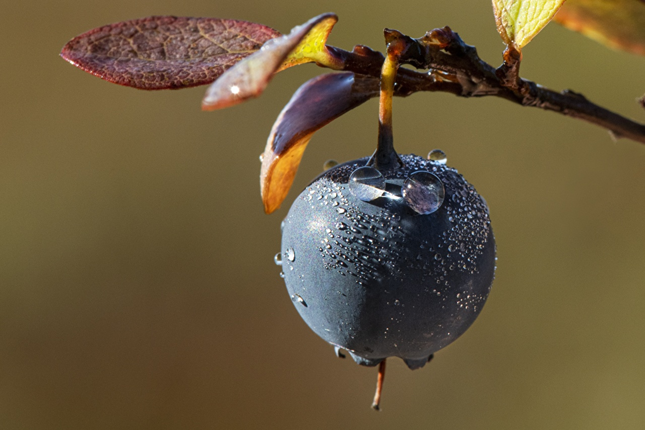 Image Drops Blueberries Food Closeup