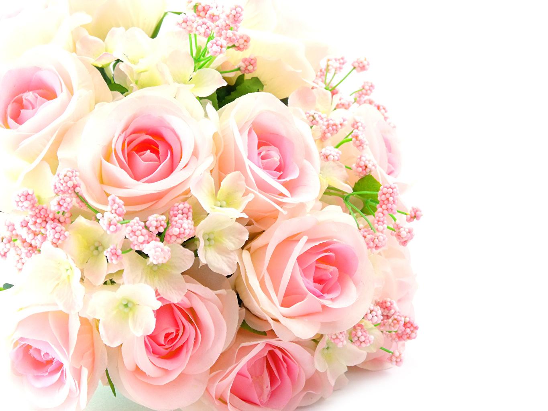 壁紙 バラ ブーケ ピンク 白背景 花 ダウンロード 写真