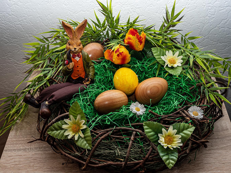 Foto Ostern Kaninchen Ei Nest Blumen Gras das Essen Design eier Blüte Lebensmittel