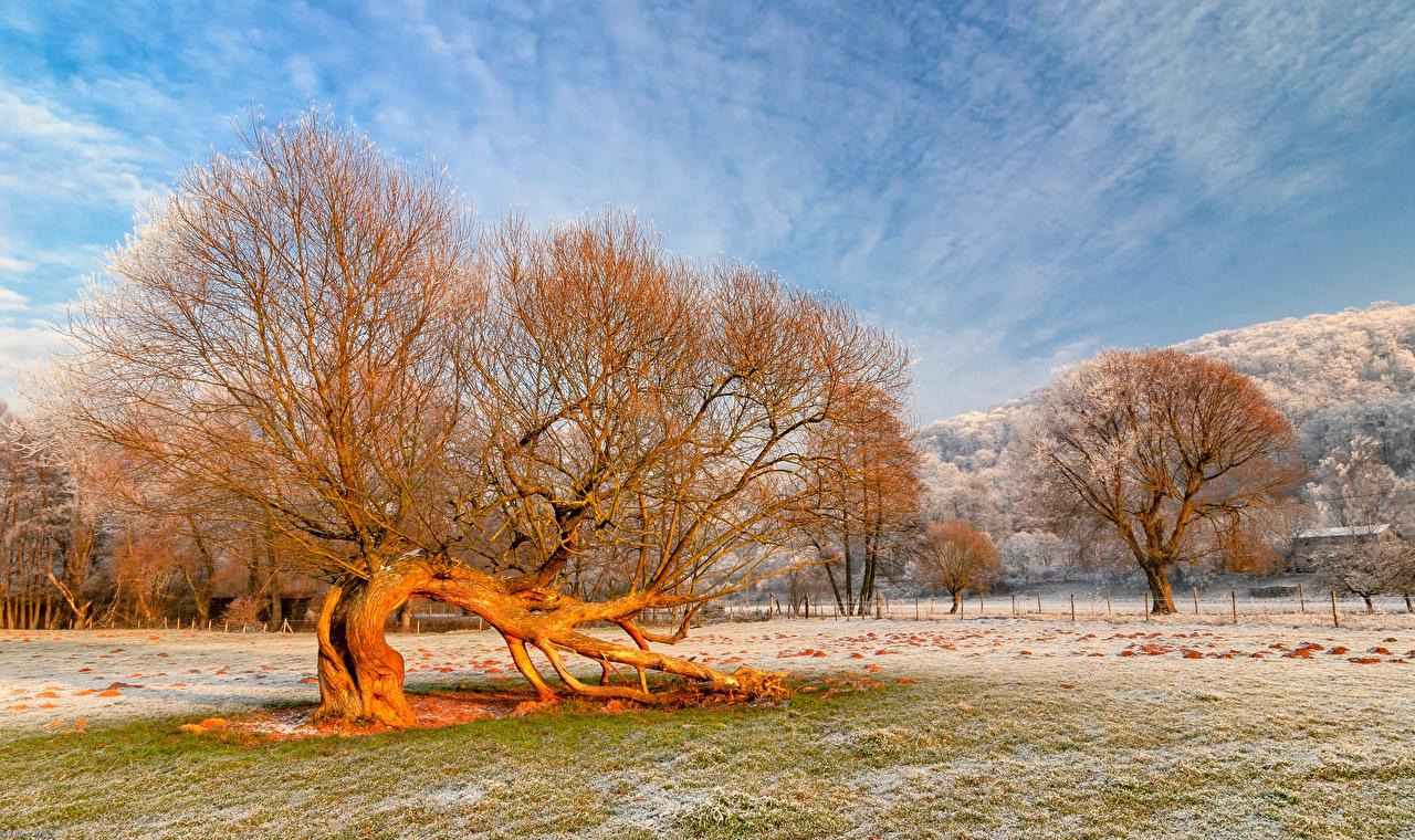 Photos Germany Frost Rheinland-Pfalz Nature Trees