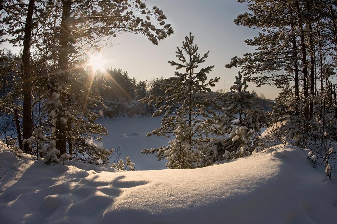 Estaciones del año Invierno Rayos de luz Nieve árboles Naturaleza