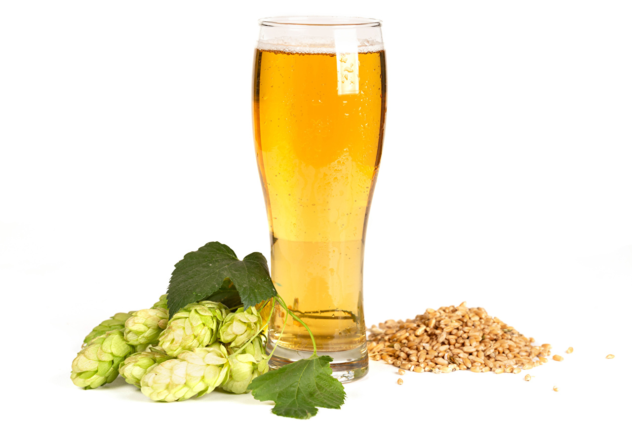 Desktop Wallpapers Beer Humulus Grain Highball glass Food White background Hops