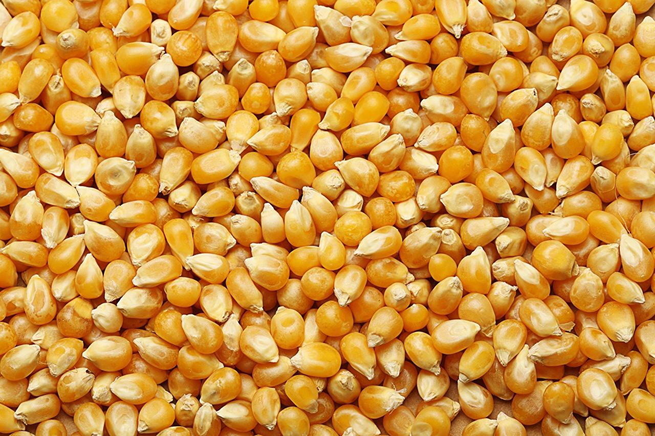Immagini Il mais chicco alimento molti Grana Grano Chicchi Cibo Molte
