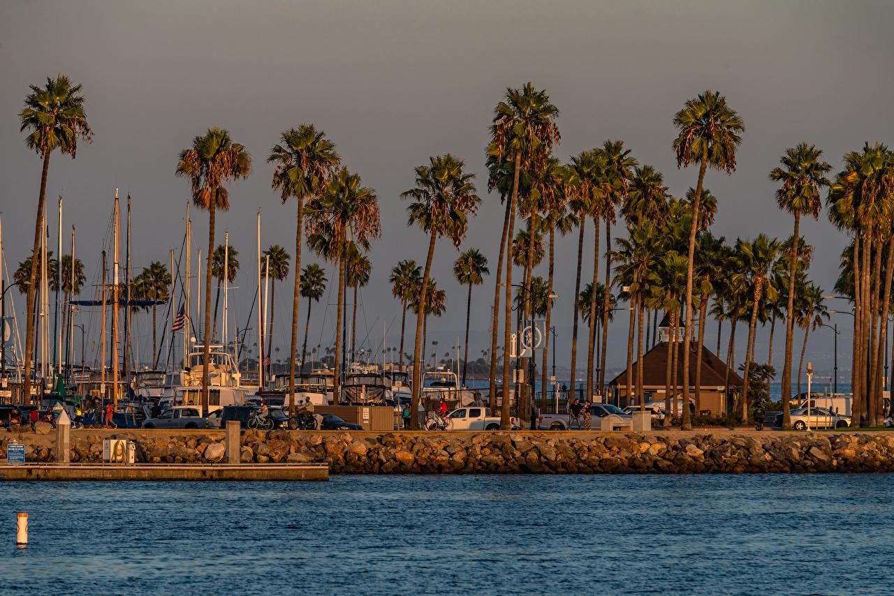 Foto USA Shoreline Village Long Beach Palmengewächse Küste Schiffsanleger Städte Gebäude Vereinigte Staaten Palmen Bootssteg Seebrücke Haus