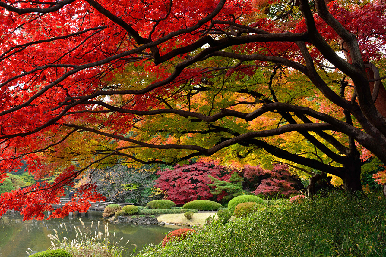 Wallpaper Tokyo Japan Nature Parks Branches Trees