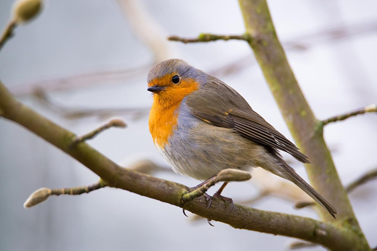 Fotos Vögel Bokeh Ast Tiere Vogel unscharfer Hintergrund ein Tier